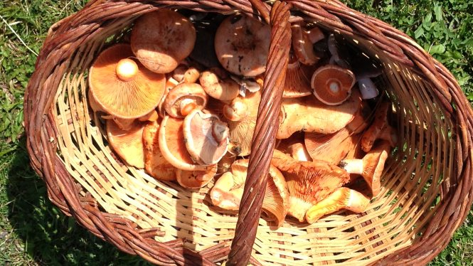Seasonal produce: mushrooms