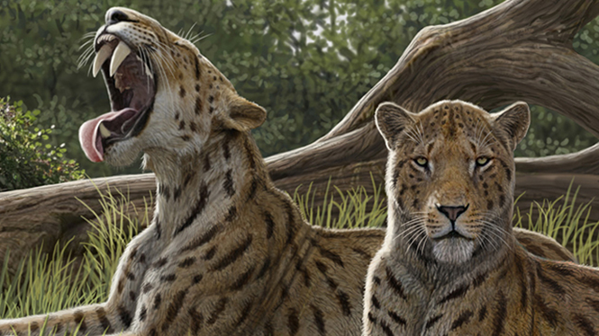 Saber-toothed tigers and mastodons. The megafauna of the Miocene period