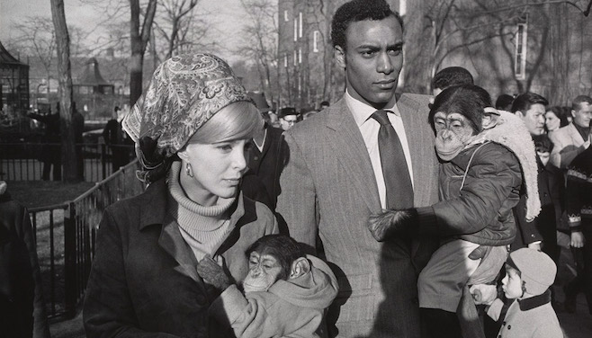 Copyright: © 1984 The Estate of Garry Winogrand, courtesy Fraenkel Gallery, San Francisco