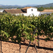 Wine, Tapas and Cava - Traditional Wineries